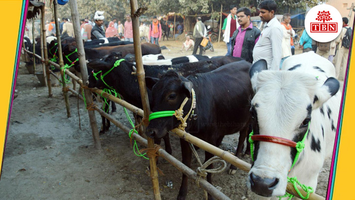 Sonpur Mela is known for the world largest cattle fair | The Bihar News