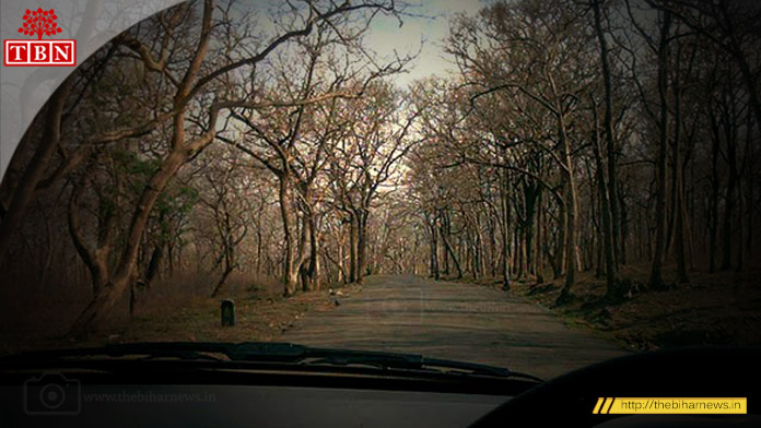 thebiharnews-in-most-haunted-highway-Sathyamangalam-wildlife-sanctuary-corridor