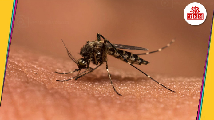 thebiharnews-in-Home-remedies-for-Malaria-Fever-